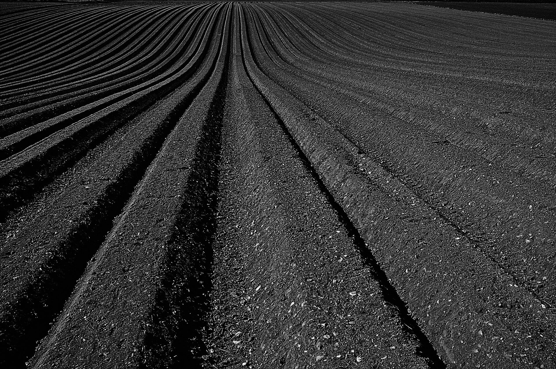 A photo of tilled rows.