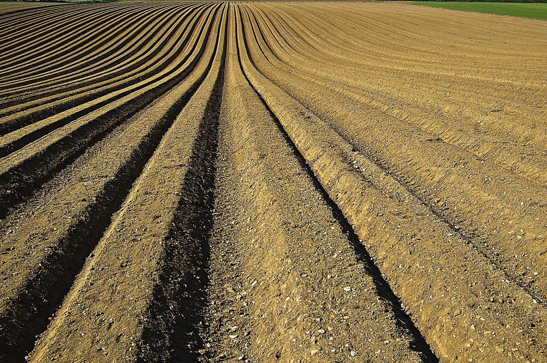 A row of tilled soil.