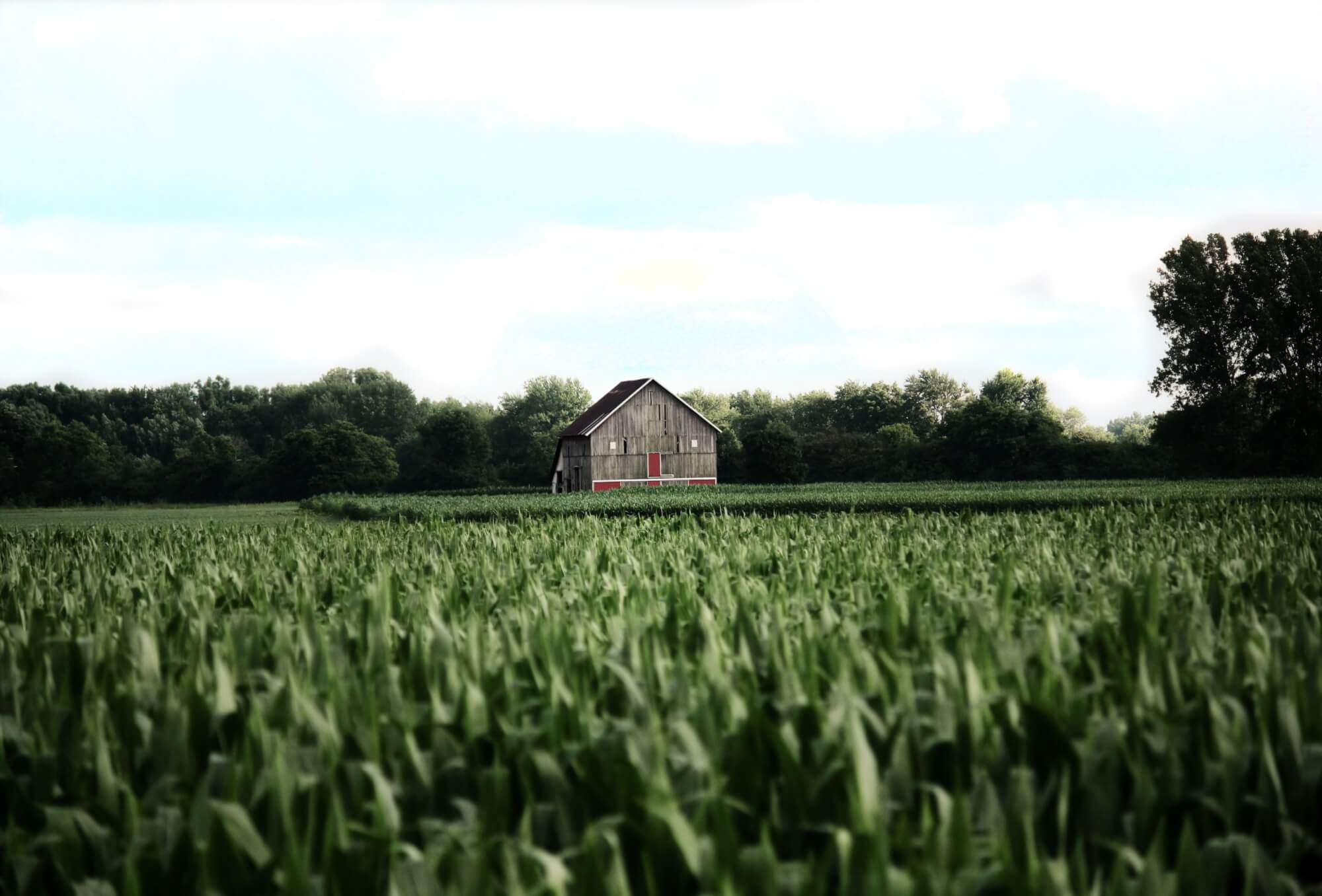 An image of an old barn.